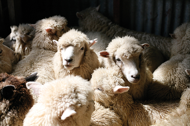 Hell for leather: The truth behind the wool and leather industry
