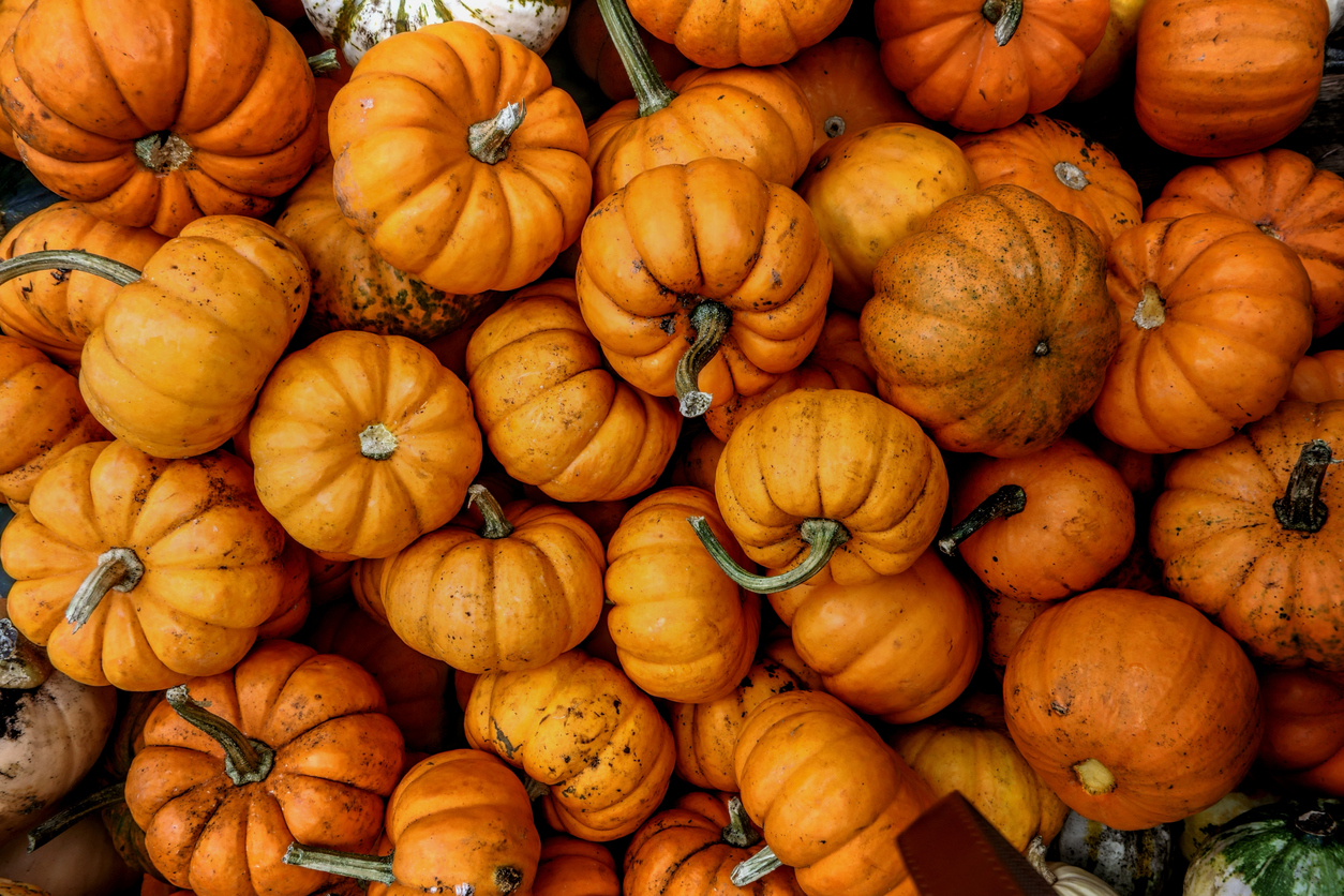 Health benefits: 8 reasons why you should be eating more pumpkin