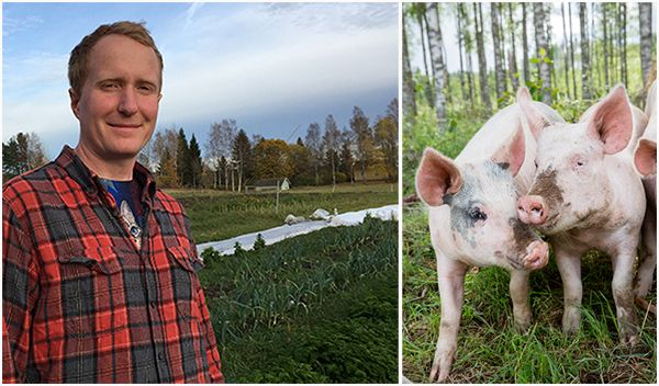 """Pig farmer goes vegan and quits farming saying veganism is the """"future of farming"""""""