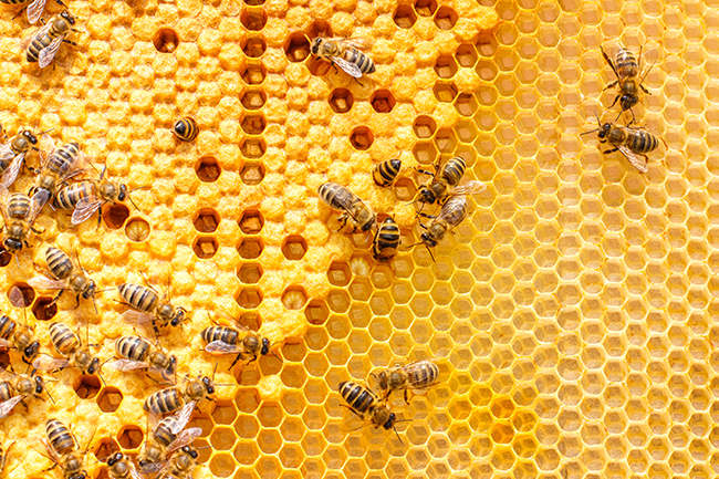 Honey: Why isn't honey vegan, and what we can use instead?