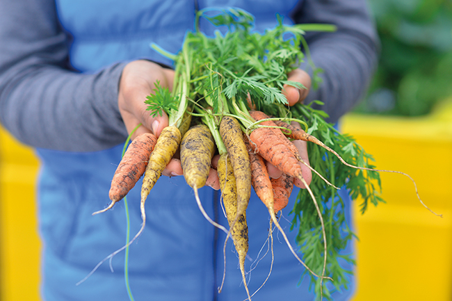 help the planet by eating seasonally