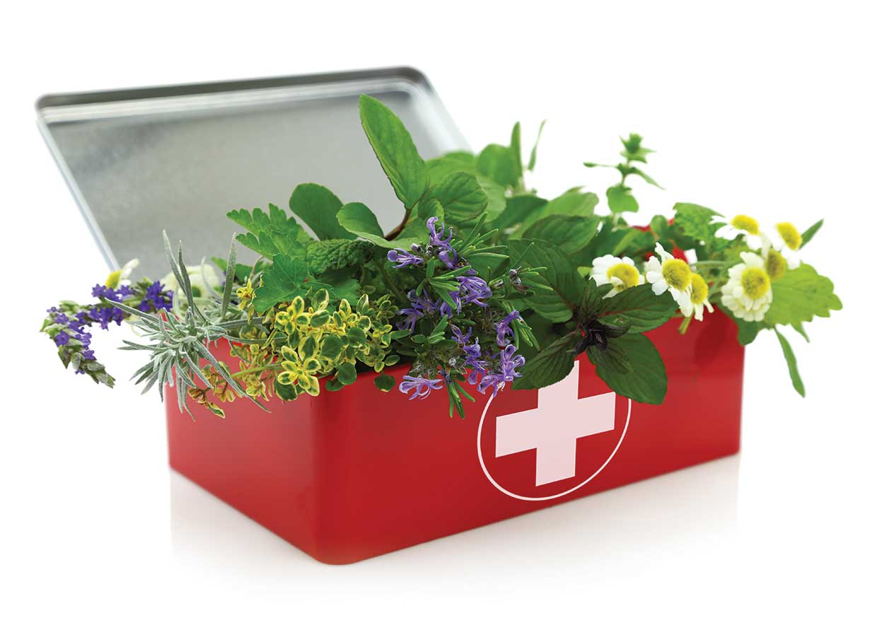 How to make your own herbal first aid kit