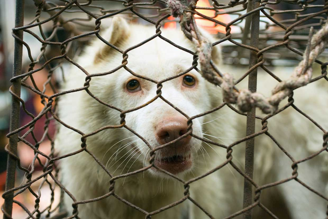China officially confirms 'dogs are companions, not for eating' ahead of Yulin festival