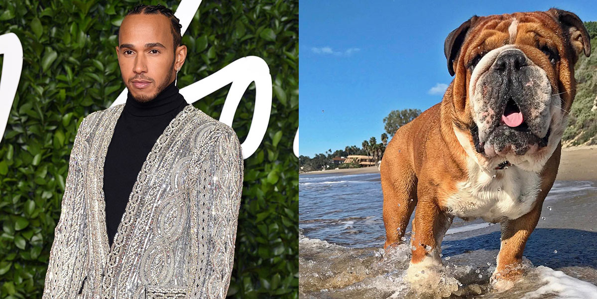 Lewis Hamilton says his dog Roscoe is 'fully vegan' and 'super happy'