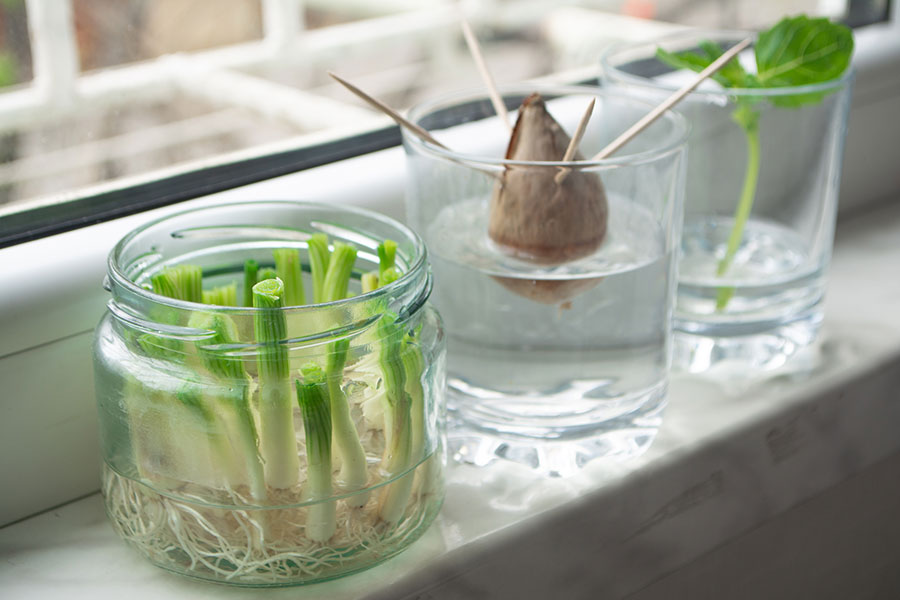 Cut down on waste and learn how to regrow foods from scraps