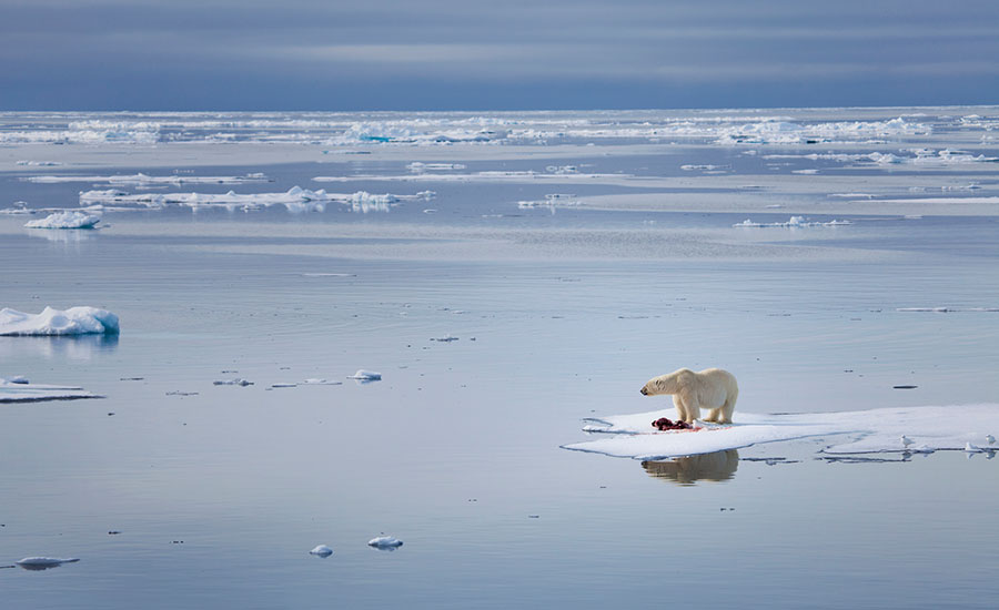Scientists predict 'frightening milestone' lies ahead with the Arctic sea yet to freeze