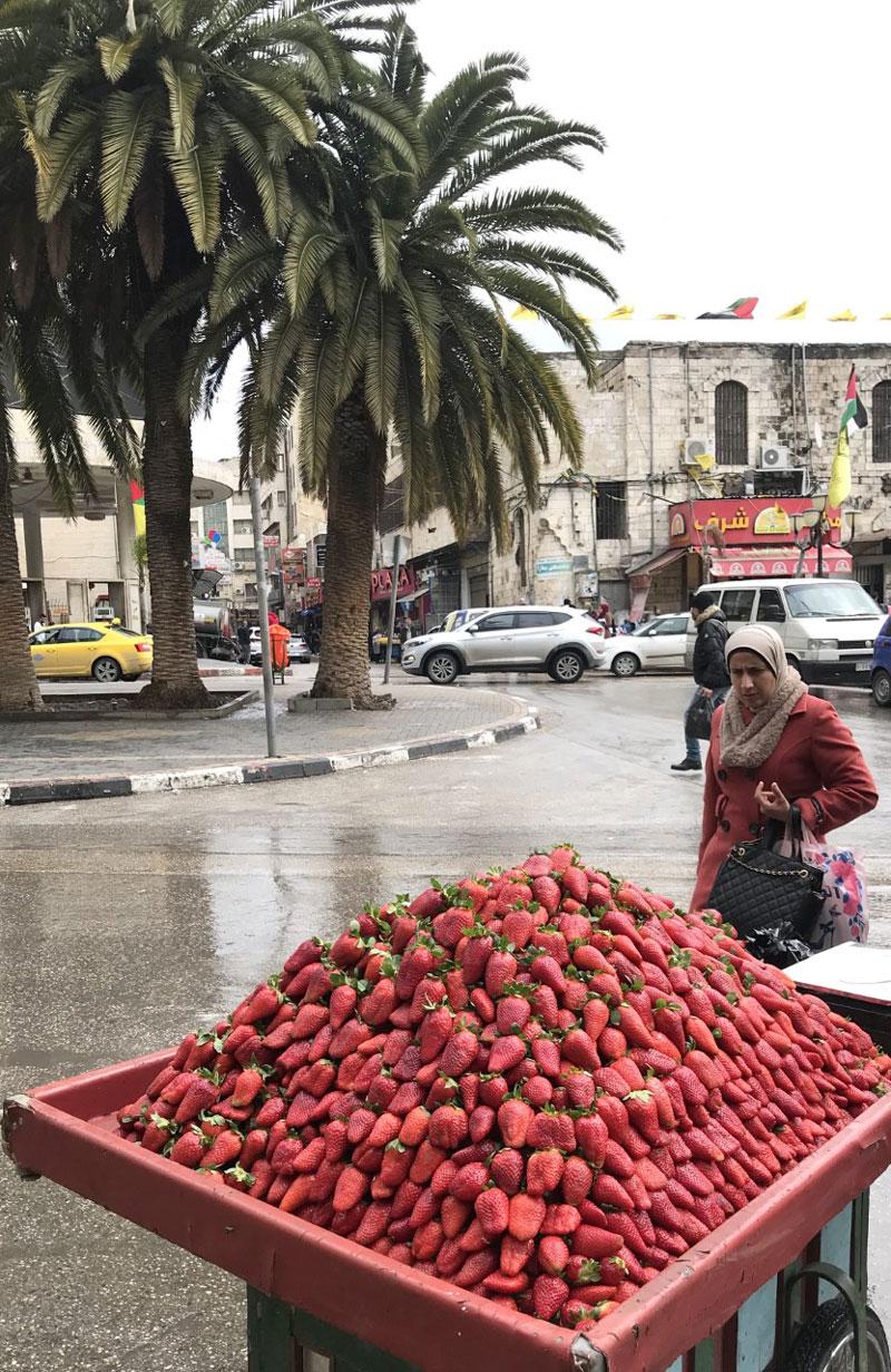 Strawberry season is Nablus