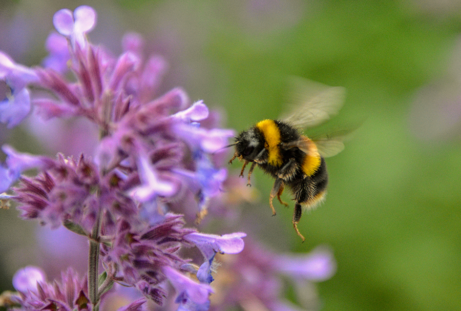 UK government approves bee-killing pesticide banned in the EU