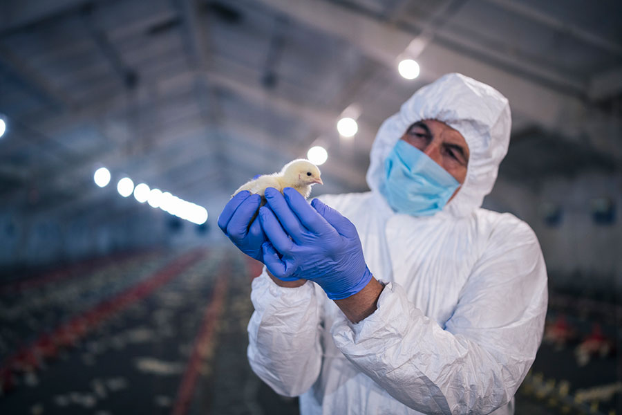Russia has recorded the first human cases of the H5N8 bird flu strain