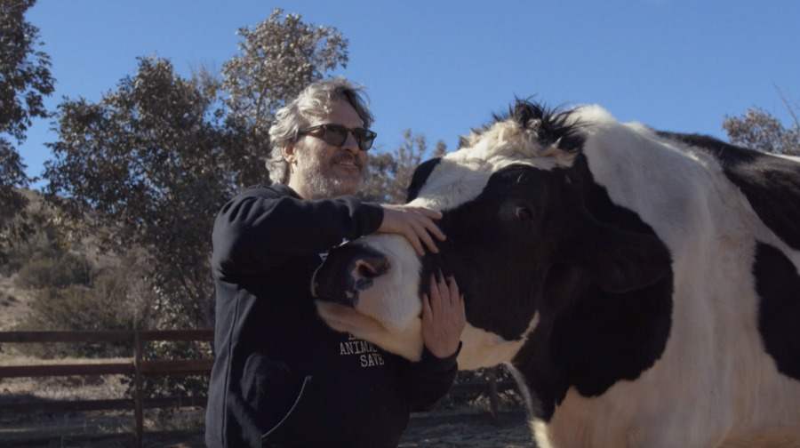 Joaquin Phoenix visits rescued cows at sanctuary in emotional documentary