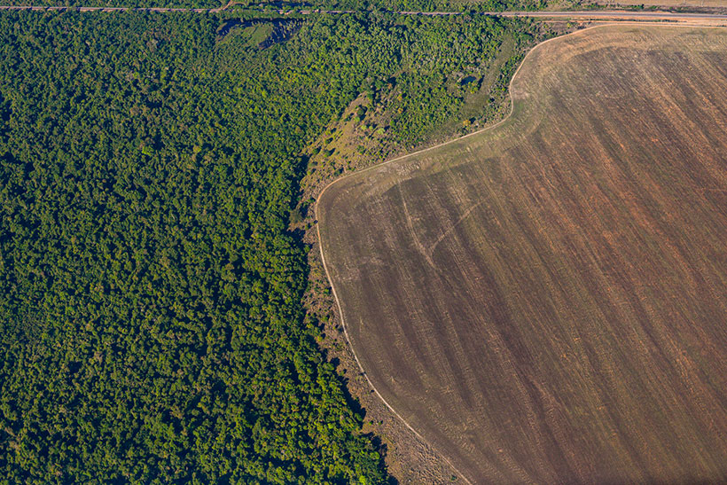 Aerial images of the Amazon rainforest show the devastating impact of animal agriculture