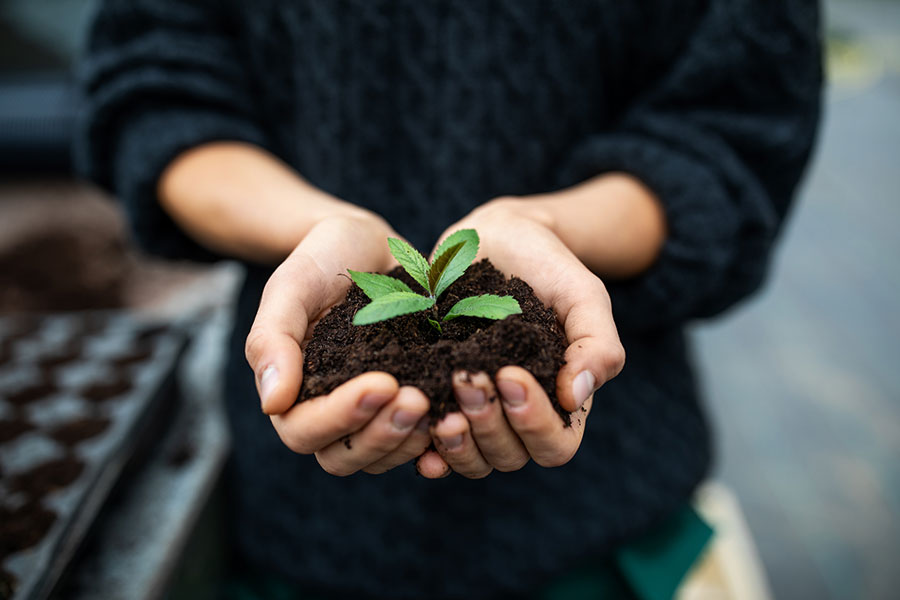 Peat free compost – the sustainable choice for vegan gardeners