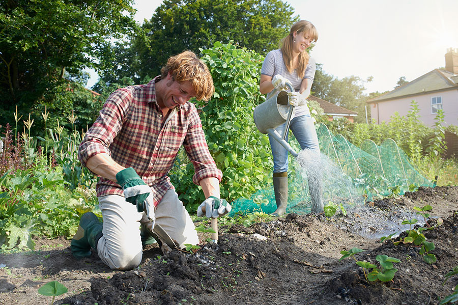 What is green gardening and why should we be doing it?