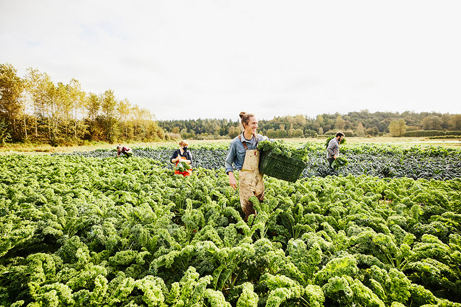 Organic farming: What is organic farming and why is it more sustainable